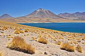 Salt lakes Laguna Miscanti and Miniques, also Laguna Altiplanicas, with volcano Cerro Miscanti, San Pedro de Atacama, Atacama Wüste, Altiplano, Valle de la Luna, Valley of the moon, Atacama desert, National Reserve, Reserva Nacional Los Flamencos, Region