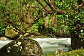 'River and vegetation at rain forest, valley Valle Cochamo, Región de los Lagos, Patagonia, Andes, Chile, Südamerika;'