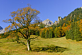autumnal colored maple and larch trees at Engalm, Großer Ahornboden, Hinterriß, Engtal valley, Northern limestone alps, Karwendel Mountains, Tyrol, Austria, European Alps, Europe