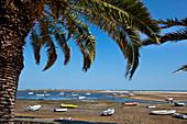Palm tree and boats, Fabrica near Cacela Velha, Algarve, Portugal