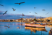 Seagulls and fishing boats, old town, Lagos, Algarve, Portugal