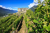 The Castel Grumello built on an morenic outcrop, surrounded by a fascinating landscape of grapes grown to produce wine, Lombardy, Italy, Europe