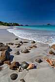 Shells and rocks lie on the beach of Spearn Bay lit the tropical sun and washed by Caribbean Sea, Antigua, Leeward Islands, West Indies, Caribbean, Central America