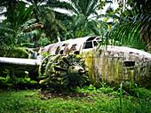 WW11 aircraft wreckage, near Kimbe, West New Britain, Papua New Guinea