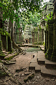 Ta Prohm, impressive temple in Angkor area built in the twelfth century, Siem Reap, Cambodia
