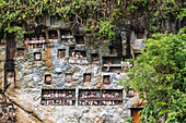 Stone graves carved out of a rocky cliff with  wood-carved effigies of the deceased, called Tau tau, Lemo, Toraja Land, South Sulawesi, Indonesia