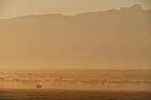 Silhouette of ostrich at dawn in front of Mt Kenya, Ol Pejeta Conservancy, Kenya