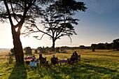 Bush breakfast under large acacia tree, Ol Pejeta Conservancy, Kenya