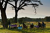 Bush breakfast under large acacia tree with Mt Kenya in the distance, Ol Pejeta Conservancy, Kenya
