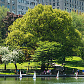 'Miniature sailboats on the water at an urban park; New York City, New York, United States of America'