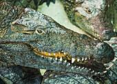 Crocodile Park,Torremolinos,Costa Del