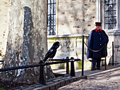 'A Yeoman Warder and a guardian raven keep watch at the Tower of London; London, England'
