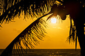 'Silhouette of a coconut tree with an orange sky at sunrise and the ocean on the horizon; Akumal, Quintana Roo, Mexico'