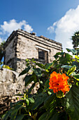 'Close up of orange flower with Ancient Mayan Temple in the background with blue sky and clouds; Tulum, Quintana Roo, Mexico'