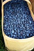Large Basket Of Fresh Blueberries, Riverdale Farmer's Market, Toronto, Ontario