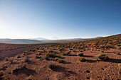 Altiplano Surrounded By Volcanoes In The Andes Cordillera Near Ollague At Dawn, Antofagasta Region, Chile