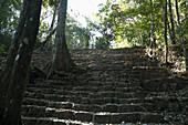 Jungle Growing Over The Acropolis, Bonampak, Chiapas, Mexico