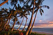 'Tropical palm trees line the beach at Keawekapu Beach, as the sun sets with Kahoolawe in the background; Wailea, Maui, Hawaii, United States of America'