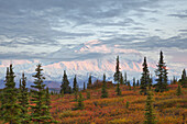 Late evening shot of the north face of Mt. McKinley Denali and fall colored tundra as seen from the Wonder Lake campground with alpine glow on the upper mountain, Denali National Park, Interior Alaska. Fall. HDR