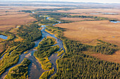 Aerial view of a stream and surrounding trees, Arctic Alaska, summer