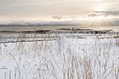 Person surfing in winter in Homer with snow and beach grass in the foreground, Kenai Peninsula, Kachemak Bay, Alaska.