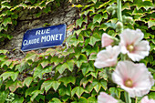 rue claude monet on the main street (virginia creeper), giverny, eure (27), normandy, france
