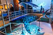 interior shot of the big aquarium of saint malo, models of sharks, (35), ille-et-vilaine, brittany, france