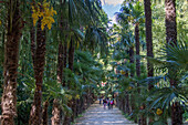 the bamboo plantation of anduze, giant bamboos more than 20 meters high and japanese and laotien-inspired botanical garden, generargues (30), france
