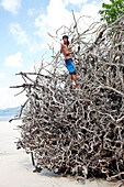 Guide auf Baumwurzel am Turtle Beach, umgefallener Badak Baum, Tour zum Schnorcheln, Barefoot Scuba, Kuestenwald ohne Palmen, Nordwestkueste, Havelock Island, Andaman Islands, Union Territory, India