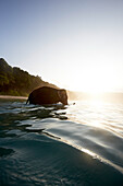 Elephant goes swimming, Beach in the early morning, the forest without palms, West Coast, Havelock Island, Andaman Islands, Union Territory, India