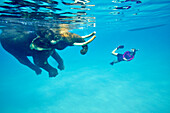Swimming elephant Rajan, diver from the Barefoot Scuba Diving School accompanying him, at Beach No. 7, Havelock Island, Andaman Islands, Union Territory, India