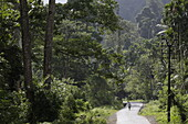 Great Andaman Trunk Road, about 20 Km north of Rangat, Middle Andaman, Andaman Islands, Union Territory, India