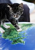 Kitten on map of Costa Verde, showing peninsula near Paraty,Natural Park, Serra do Mar, Costa Verde, Sao Paulo, Brazil