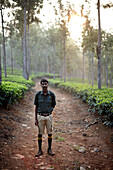 Guide Ajeesh, morning walk through tea plantation and Silver Oak Trees at Woodhouse Mansion, Woodbriar Tea Estates in Valparai, Tamil Nadu, Western Ghats, India