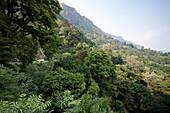 Conoor - Mettupalayam Road, Nilgiri Hills, Western Ghats, Tamil Nadu, India