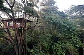 Treehouse Room 601, Treehouse 1 of Vythiri Resort near Lakkidi, Wayanad, northeast Kozhikode, Kerala, Western Ghats, India