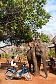 Camdodia, Ratanakiri Province, Pom O'Katieng village, O'Katieng stream, the mahout Ros Seanghu on his elephant aged 73