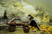 Minerworker exposed to toxic sulfur gas of the mine (devil's mine) inside the volcano Ijen on the island of Java and loading up his baskets with solidified sulfur, East Java, Ijen volcano, Indonesia