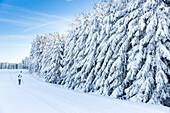 Women skiing near a winter forest, cross-country ski run, MR, Holzhau, Saxony, Germany