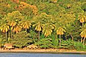 Palm trees, bar and parasols on Anse d´Ivoire beach, Soufriere, St. Lucia, Saint Lucia, Lesser Antilles, West Indies, Windward Islands, Antilles, Caribbean, Central America