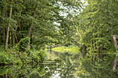 View on the river landscape and shore vegetation of the Spreewald Biosphere Reserve from the water under overcast sky, biosphere reserve, Schlepzig, Brandenburg, Germany