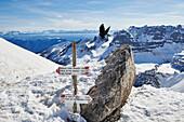 Peak of Bocchetta die Tres Cime in the Area of the Brenta Dolomites Madonna di Campiglio, Skitour, Brenta Gebirge, Dolomites, Trentino, Italien