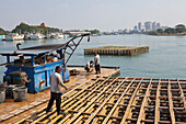 Workers in the fishing harbour in Anping near Tainan, Taiwan, Republik China, Asia