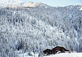 snowy forest of lark trees and old farm house, Karthaus, Schnalstal, South Tirol, Italy