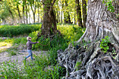 Boy playing near an old tree with tree roots, Family bicycle tour along the river Elbe, adventure, from Torgau to Riesa, Saxony, Germany, Europe