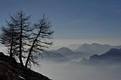 Cima Creino, view to the Adamello, Trentino, Italy
