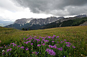 Peitler meadows, View to Campill Valley, Geisler Group, Dolomites, South Tyrol, Italy