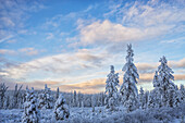 Winter late afternoon light begins to colour the sky along Annie Lake Road near Whitehorse, Yukon, Canada