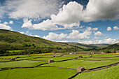 Meadows at Gunnerside, looking back up Swaledale, with drystone walls and field barns, North Yorkshire, England