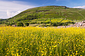 Traditional hay meadow, covered in buttercup flowers, with Kisdon Hill, Swaledale, in the background, Yorkshire, England